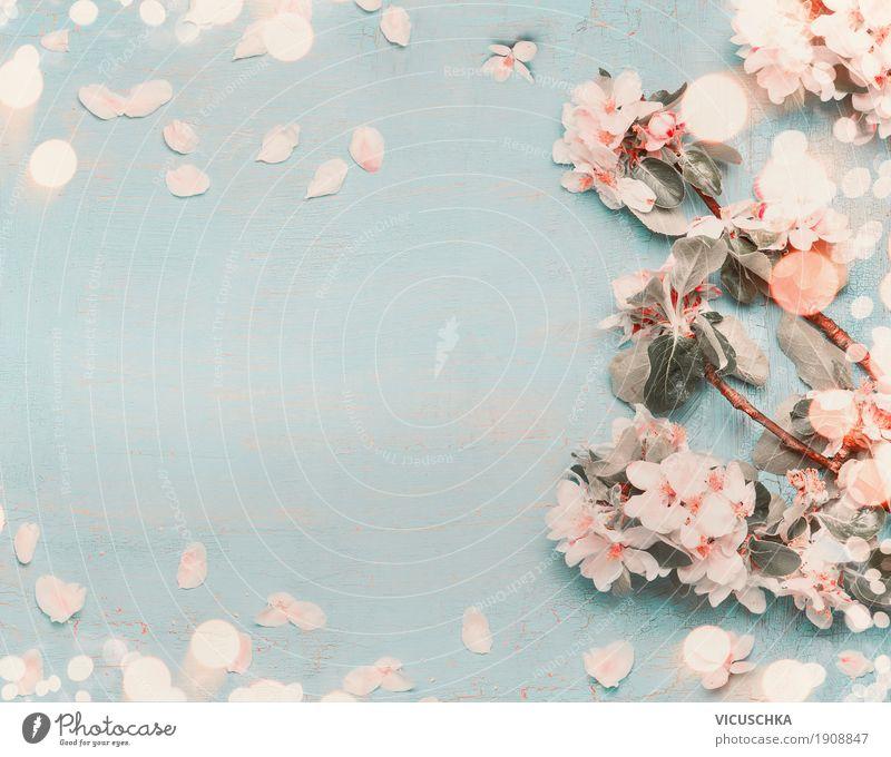 Hübsche Frühlingsblüten auf hellblauem Hintergrund Stil Design Sommer Dekoration & Verzierung Feste & Feiern Natur Pflanze Blume Blüte Garten Blühend Duft April