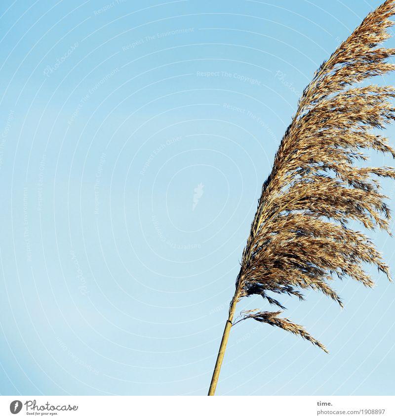 Vibration | aus dem Bild geweht Pflanze Himmel Wolkenloser Himmel Schönes Wetter Gras kämpfen stehen Wachstum authentisch elegant Lebensfreude beweglich