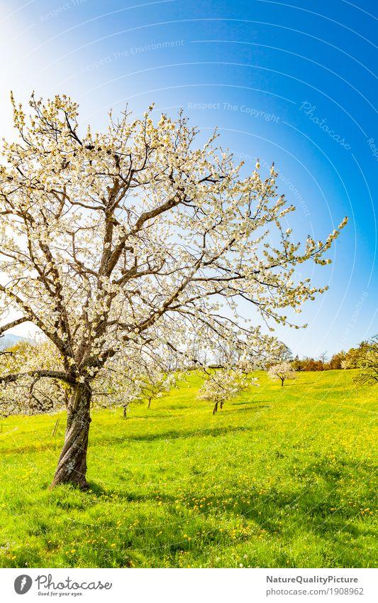 spring Himmel Natur Pflanze Sommer Sonne Baum Blume Landschaft Erholung ruhig Umwelt Leben Blüte Frühling Wiese Gras