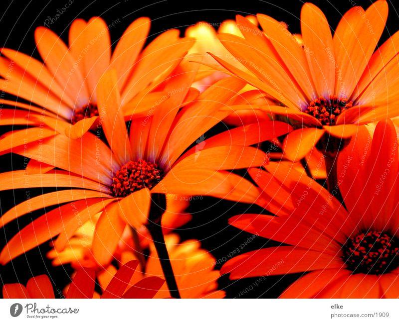 impression Blume Pflanze Blüte