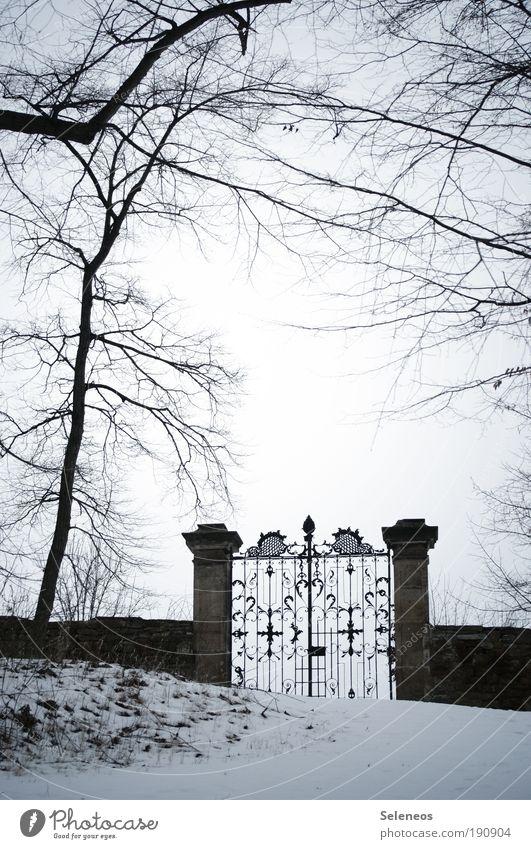 Tor zur Welt Natur alt Himmel Baum Pflanze Winter dunkel kalt Schnee Gras Park Landschaft Eis Umwelt Erde