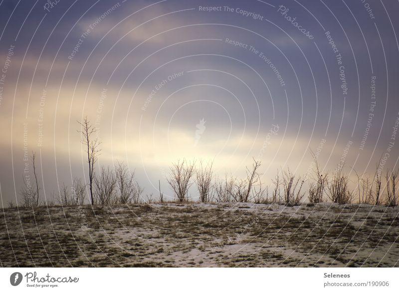 Gräser Umwelt Natur Landschaft Pflanze Erde Himmel Wolken Horizont Sonne Sonnenlicht Winter Klima Klimawandel Wetter Schönes Wetter Eis Frost Schnee Gras