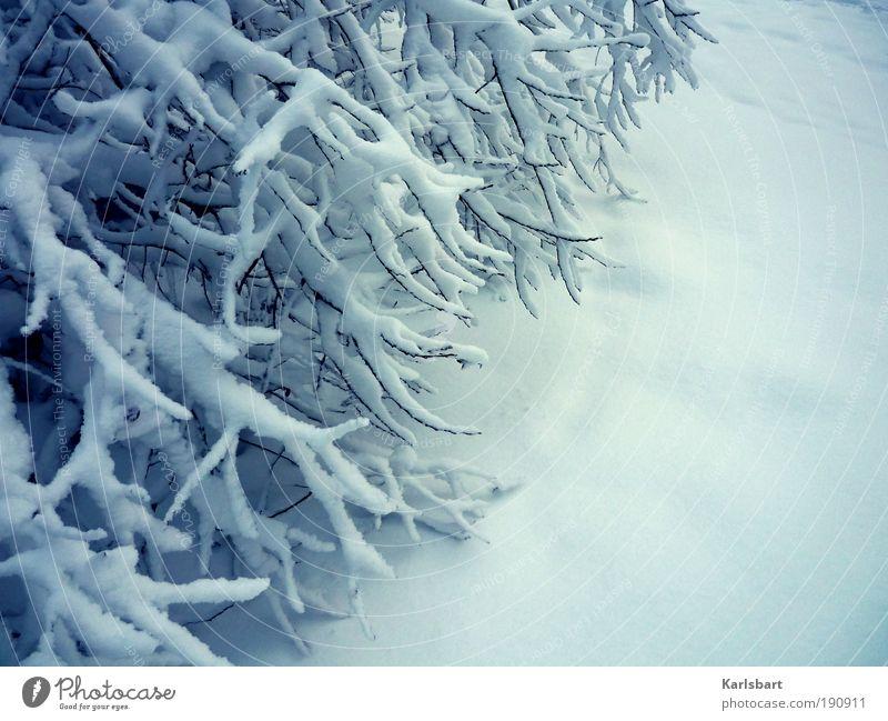 des waldes neue kleider. Natur Ferien & Urlaub & Reisen weiß Pflanze Winter Umwelt kalt Schnee Klima Design Lifestyle Sträucher Idylle Ast Jahreszeiten