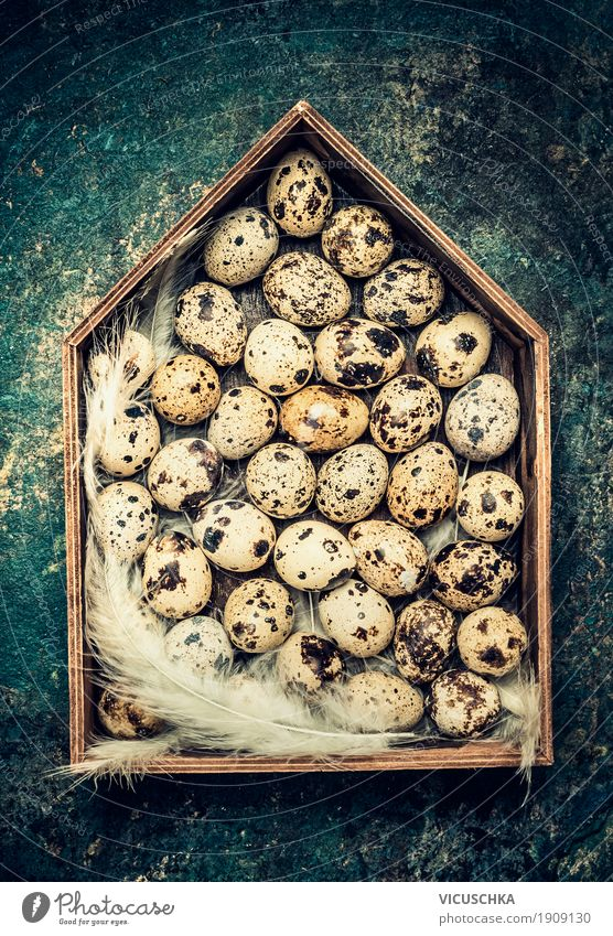 Eier und Federn in Holzhaus Dekoration Stil Design Leben Innenarchitektur Dekoration & Verzierung Ostern gelb Tradition Nest Symbole & Metaphern altehrwürdig