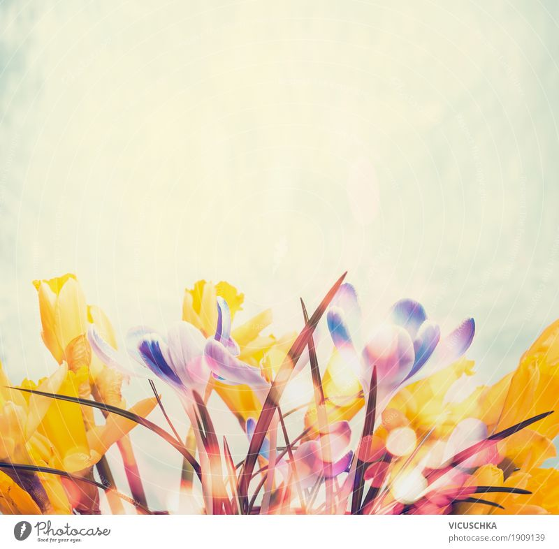 Frühjahr Hintergrund mit verschiedenen Frühlingsblumen Lifestyle Design Garten Dekoration & Verzierung Natur Pflanze Blume Blüte gelb Stil Hintergrundbild