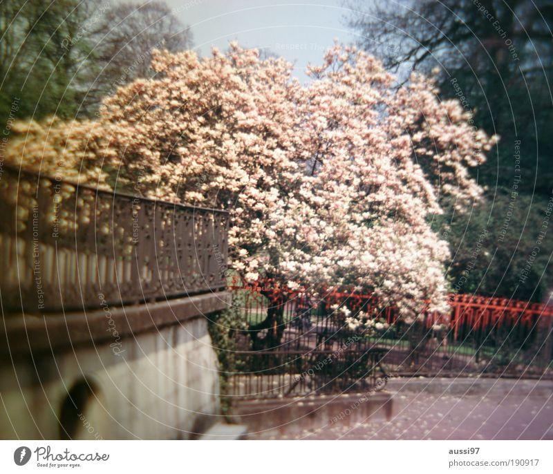 Alone in Kyoto Baum Blühend Kirschblüten Park Kurpark Zaun Geländer Brückengeländer rot Japan Asien liquide