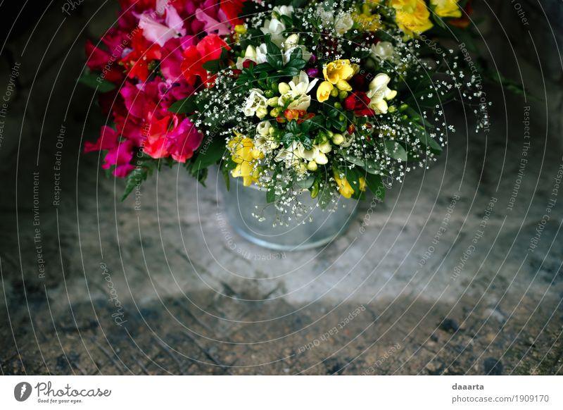 Blumeneimer Natur Pflanze Sommer schön Freude Umwelt Leben Lifestyle Stil Freiheit Feste & Feiern Stimmung wild Freizeit & Hobby elegant