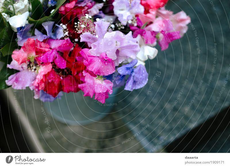 Kratzer Pflanze Sommer schön Blume Freude Leben Liebe Lifestyle Stil Garten Freiheit Feste & Feiern Stimmung Design Freizeit & Hobby Park