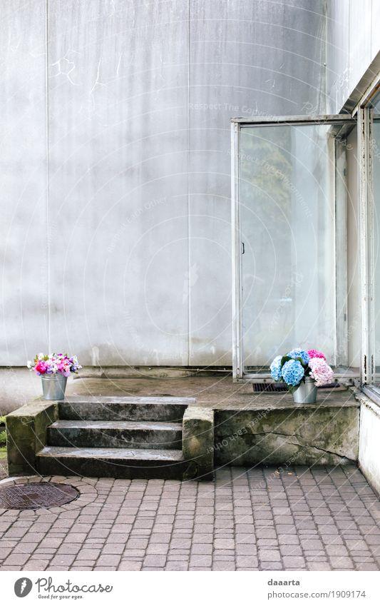 Blumen übrig Natur Pflanze schön Haus Freude Wärme Leben Liebe Gefühle feminin Stil Spielen Feste & Feiern Stimmung Design