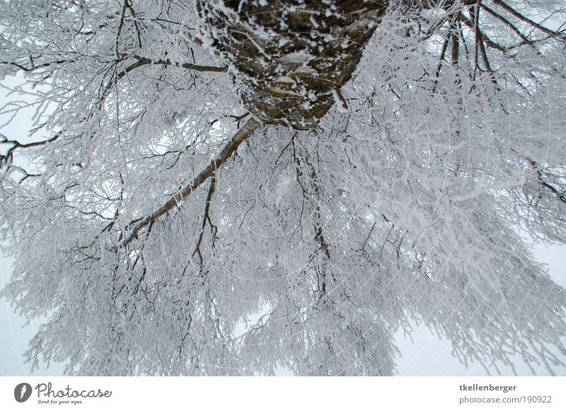 ich guck in die luft Natur weiß Baum Pflanze Winter schwarz Wolken kalt grau Park Eis braun Umwelt groß Frost Klima