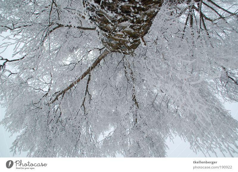 ich guck in die luft Umwelt Natur Wolken Winter Klima Eis Frost Pflanze Baum Ast Zweige u. Äste Schneelast weiß Park frieren groß kalt braun grau schwarz Stress