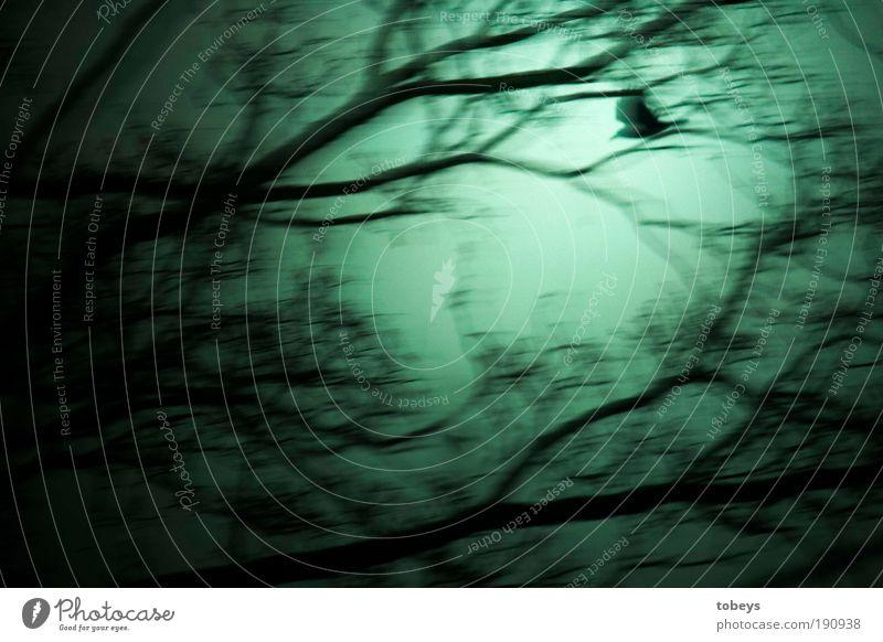 Weiser Wanderer Baum Einsamkeit dunkel träumen Vogel Angst gehen fliegen bedrohlich geheimnisvoll Gefühle Panik mystisch Rabenvögel Zauberwald