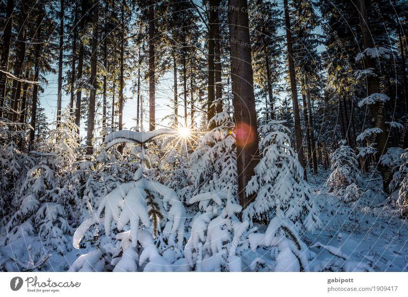 Nach dem Schnee Zufriedenheit Sinnesorgane ruhig Freizeit & Hobby Ferien & Urlaub & Reisen Tourismus Ausflug Winter Winterurlaub Berge u. Gebirge wandern Natur