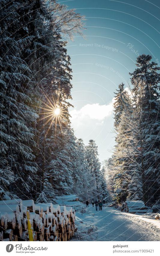 Winteranfang Himmel Natur Ferien & Urlaub & Reisen Landschaft Wald Berge u. Gebirge Leben Lifestyle Umwelt kalt Gesundheit Schnee Tourismus Ausflug Schneefall