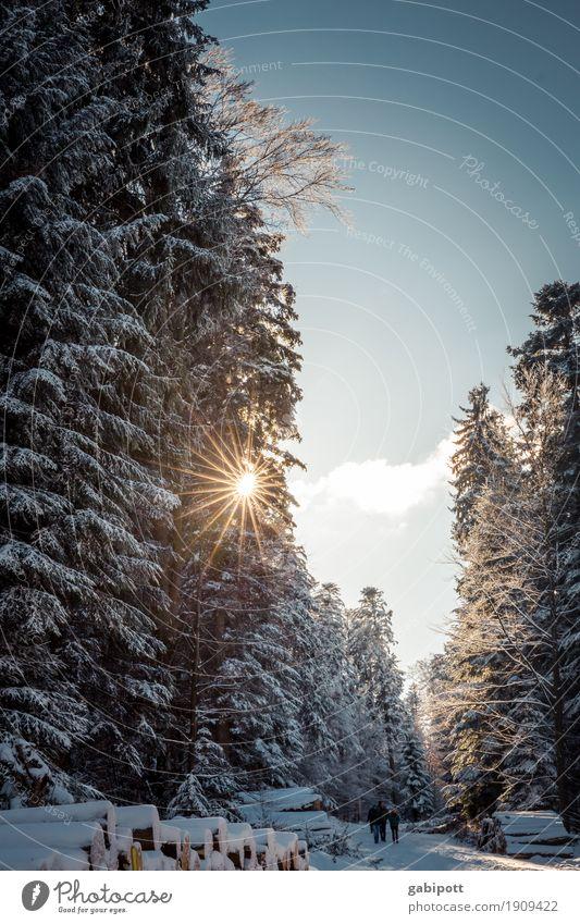 WinterSchwarzWald Natur Ferien & Urlaub & Reisen Pflanze Sonne Baum Landschaft ruhig Berge u. Gebirge kalt Leben Schnee Bewegung Tourismus Freizeit & Hobby