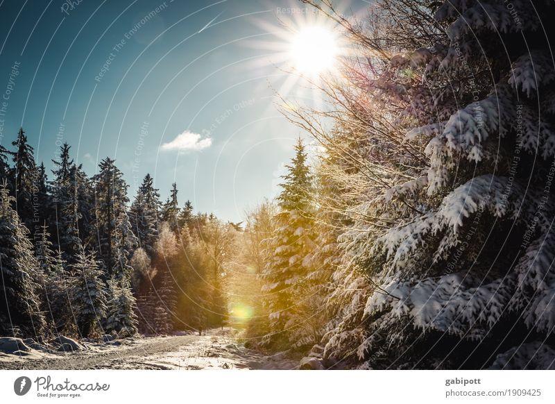 WinterSchwarzWald Himmel Ferien & Urlaub & Reisen Pflanze Baum Landschaft ruhig Berge u. Gebirge kalt Leben Wege & Pfade Schnee natürlich Bewegung Gesundheit