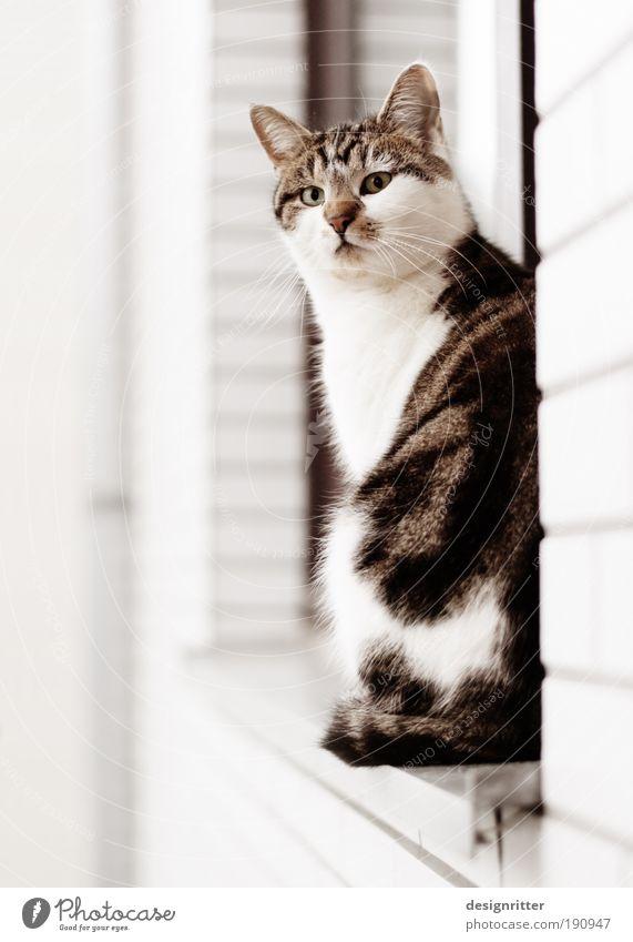 Nochnoi Dozor Haus Mauer Wand Fenster Haustier Katze 1 Tier Blick sitzen warten Häusliches Leben ästhetisch schön Wohnung Revier Besitz Heimat Wächter