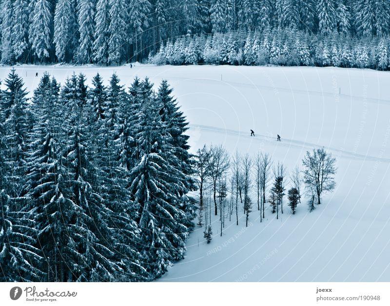Verfolgungswahn Wintersport Mensch 2 Natur Landschaft Eis Frost Schnee Baum Wald Sport Skilanglauf Loipe verfolgen ehrgeizig Schneelandschaft Wettlauf