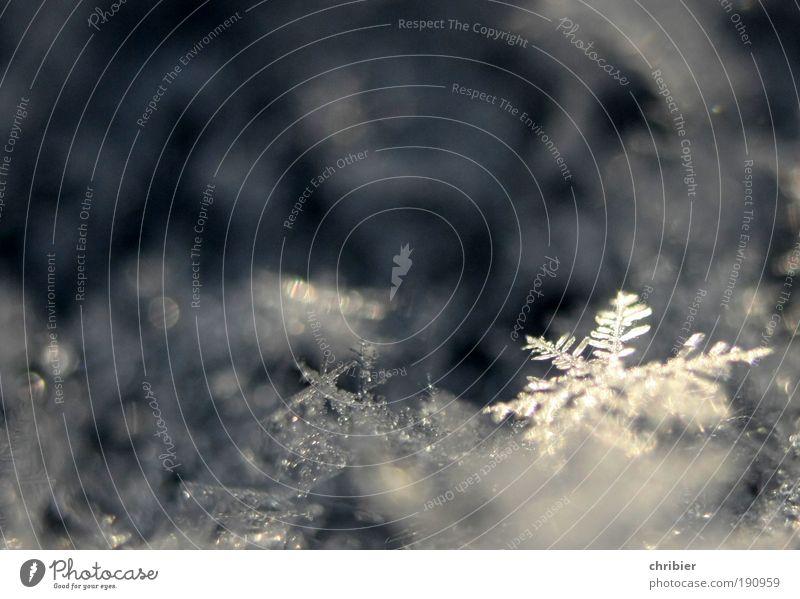 Sternchen Wasser Winter Klimawandel Eis Frost fallen frieren glänzend ästhetisch schön kalt klein nah grau silber weiß bizarr elegant Symmetrie Vergänglichkeit