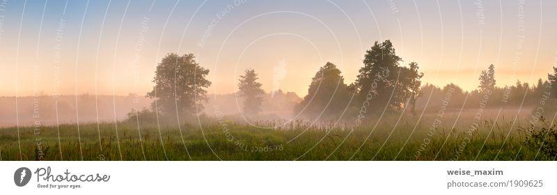 Sommer nebligen Morgendämmerung auf dem Moor. Nebeliger Sumpf am Morgen Ferien & Urlaub & Reisen Tourismus Ausflug Freiheit Expedition Camping Natur Landschaft