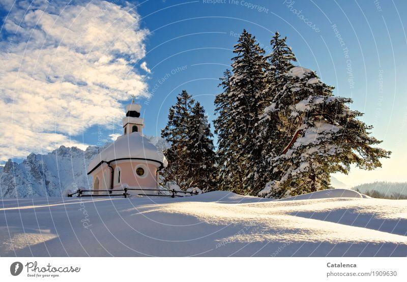 Transzendenz | göttliche Überhebung Himmel Pflanze blau weiß Baum Landschaft Wolken Winter Berge u. Gebirge schwarz Religion & Glaube kalt Schnee rosa glänzend