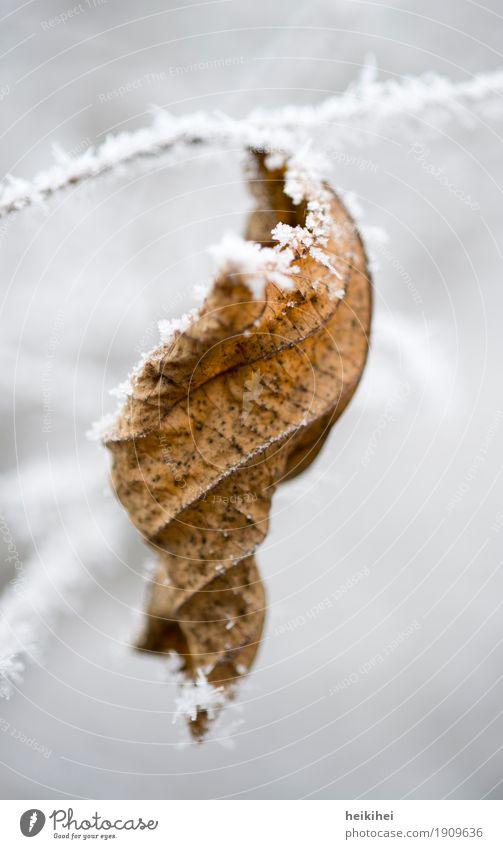 Wintertime Natur Eis Frost Schnee Pflanze Blatt kalt Garten Park frieren Gesicht gelb braun schwarz weiß Einsamkeit Vergänglichkeit Baum Zweig Ast Herbst