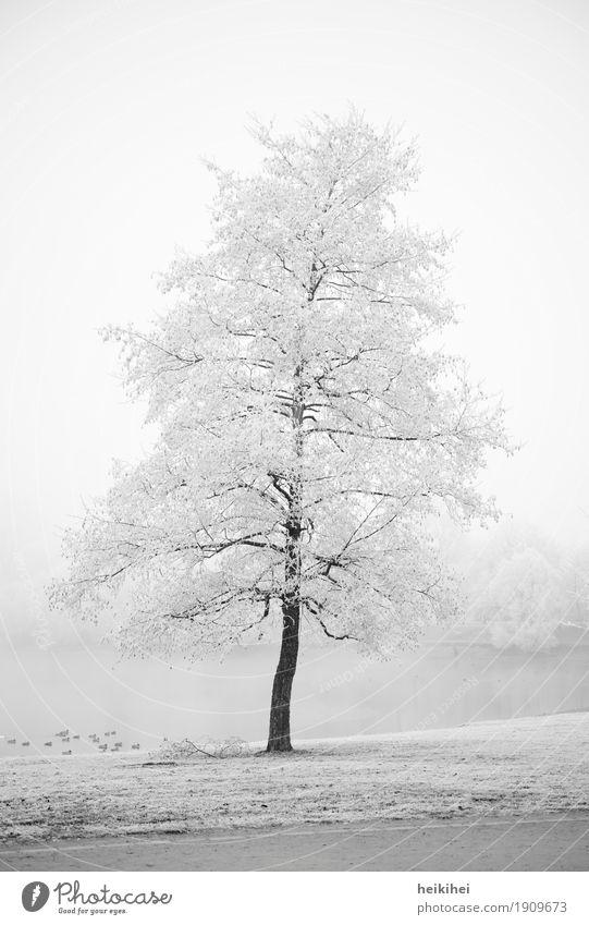 Winterwonderland Umwelt Natur Landschaft Pflanze Erde Wasser Himmel Horizont Nebel Eis Frost Schnee Baum Garten Park Wiese Küste Coolness kalt braun grau