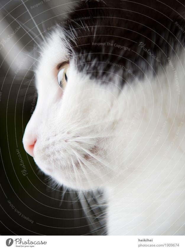 Träumerin Tier Haustier Katze 1 beobachten Denken Erholung genießen hocken leuchten Blick ästhetisch authentisch Freundlichkeit Glück schön Neugier niedlich