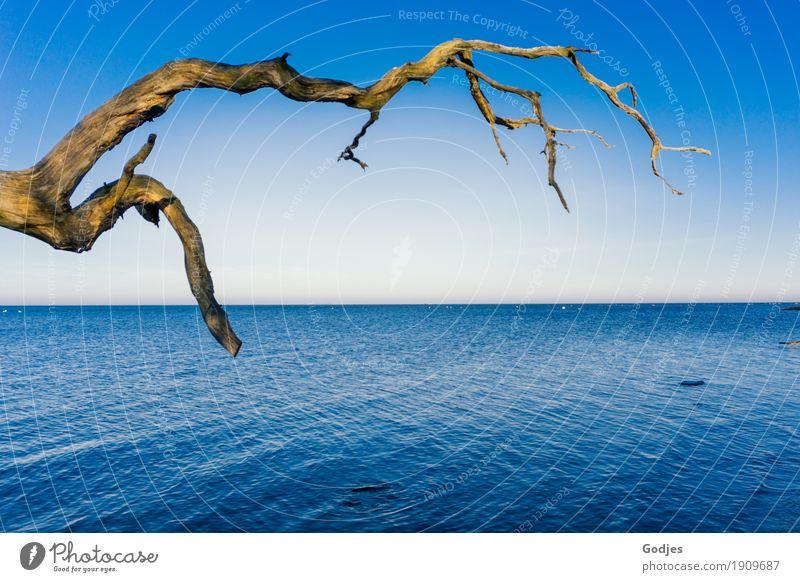Schlichtheit Natur Wasser Himmel Wolkenloser Himmel Winter Schönes Wetter Eis Frost Baum Küste Ostsee einfach schön stark blau braun gelb grün türkis weiß