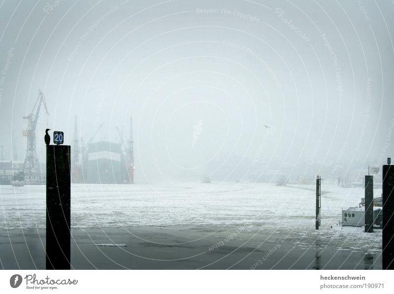 Suppe Winter Einsamkeit kalt grau Traurigkeit Eis Vogel warten Hamburg Industrie Güterverkehr & Logistik Fluss Hafen Handwerk Wirtschaft Handel