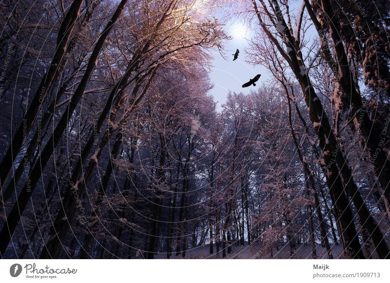 after midnight Composing Digitalfotografie Umwelt Natur Landschaft Luft Nachthimmel Mond Winter Baum Wald Hügel Vogel 2 Tier Einsamkeit mystisch Freiheit