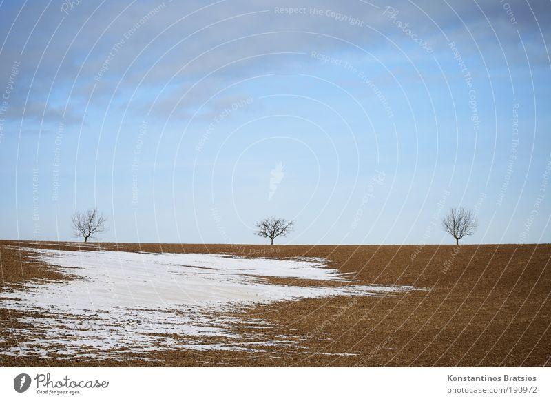langsam aber sicher Natur schön Himmel weiß Baum blau Winter ruhig Wolken kalt Schnee grau Landschaft Stimmung braun Feld