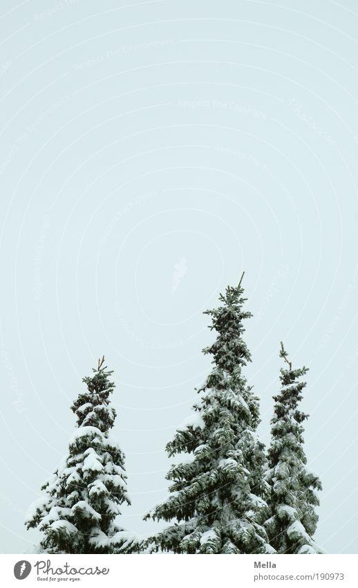 Drei Umwelt Natur Landschaft Pflanze Himmel Winter Klima Klimawandel Wetter Eis Frost Schnee Baum Tanne kalt natürlich ruhig bedeckt Farbfoto Außenaufnahme