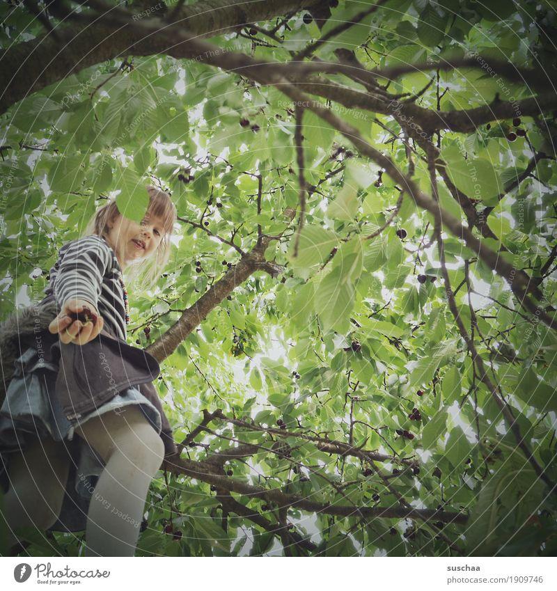 kirschen pflücken II Kind Mädchen Baum Ast Blatt Sommer Obstbaum Ernte Klettern Kirsche Kirschbaum Kindheit Hand geben Obstgarten Natur auf dem Land
