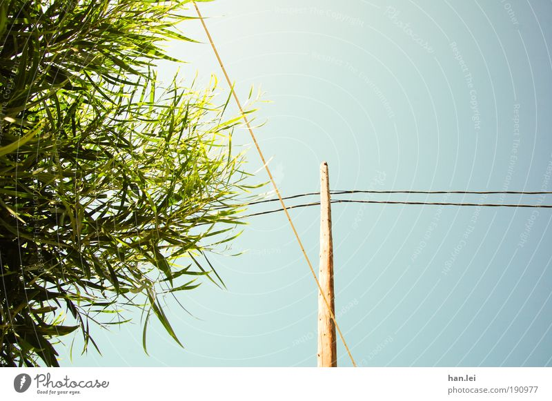 Blue & Green Farbfoto Außenaufnahme Menschenleer Textfreiraum rechts blau grün Pflanze Baum Sträucher Blatt Strommast Kabel Holz Blauer Himmel Schönes Wetter
