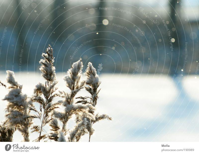 Es schneit Umwelt Natur Landschaft Pflanze Luft Winter Klima Klimawandel Wetter Eis Frost Schnee Schneefall Gras Seeufer kalt ruhig Idylle Schneeflocke Farbfoto