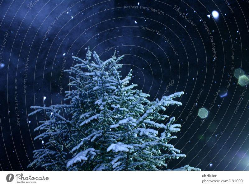 Schneewinter blau schön weiß Baum ruhig Winter Wald Schnee Schneefall Wetter Eis Nebel Frost fallen Weihnachtsbaum Tanne