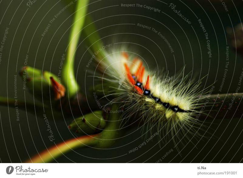 was bin ich? Umwelt Natur Landschaft Pflanze Tier Baum Wildpflanze Park Wiese Wildtier Raupe Pelztier 1 Tierjunges atmen Bewegung krabbeln laufen Wachstum