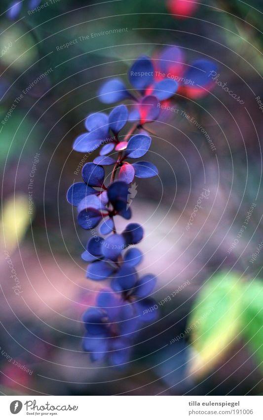 ... Natur schön blau Pflanze Blatt kalt Erholung Bewegung Park Umwelt Wachstum Sträucher wild natürlich Idylle Originalität