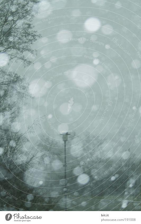 NOCHMAL DEM MEISTER DES WALDES Natur Himmel Baum Winter Wald Lampe dunkel kalt Schnee Schneefall Landschaft Eis Umwelt Frost Klima fantastisch