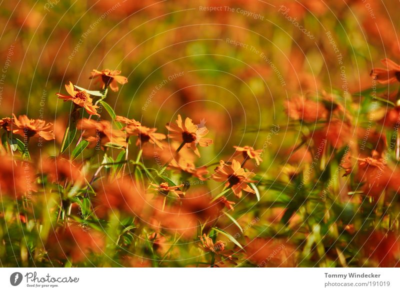 Frühlingsgefühl Natur Pflanze schön Farbe Sommer Blume Umwelt Blüte Stimmung orange Wachstum leuchten frisch verrückt Kreativität