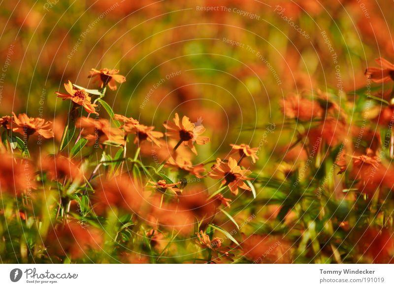 Frühlingsgefühl Natur Pflanze schön Farbe Sommer Blume Umwelt Frühling Blüte Stimmung orange Wachstum leuchten frisch verrückt Kreativität