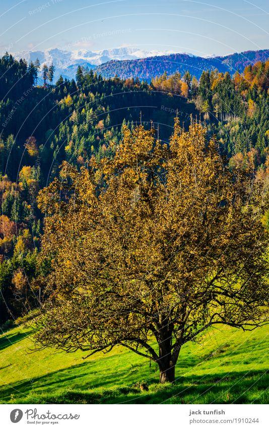 Weitblick im Herbst Umwelt Landschaft Pflanze Luft Himmel Wolkenloser Himmel Baum Hügel Alpen Berge u. Gebirge Schneebedeckte Gipfel ästhetisch blau mehrfarbig