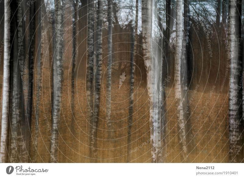Flying trees Umwelt Natur Landschaft Erde Pflanze Baum Park Wald außergewöhnlich Unendlichkeit trocken Waldboden Waldrand Waldlichtung Baumstamm Gemälde weiß