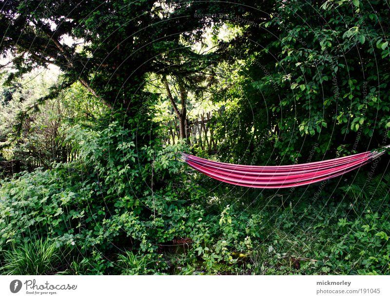 Hanging Loose Wohlgefühl Erholung ruhig Freizeit & Hobby Ferien & Urlaub & Reisen Umwelt Natur Sommer Schönes Wetter Baum Garten natürlich weich Glück