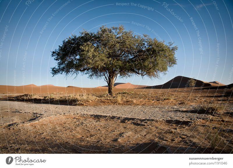 living desert Natur Baum Pflanze Sommer Wärme Sand Landschaft Zufriedenheit Umwelt Afrika Wüste Urelemente Namibia Wolkenloser Himmel