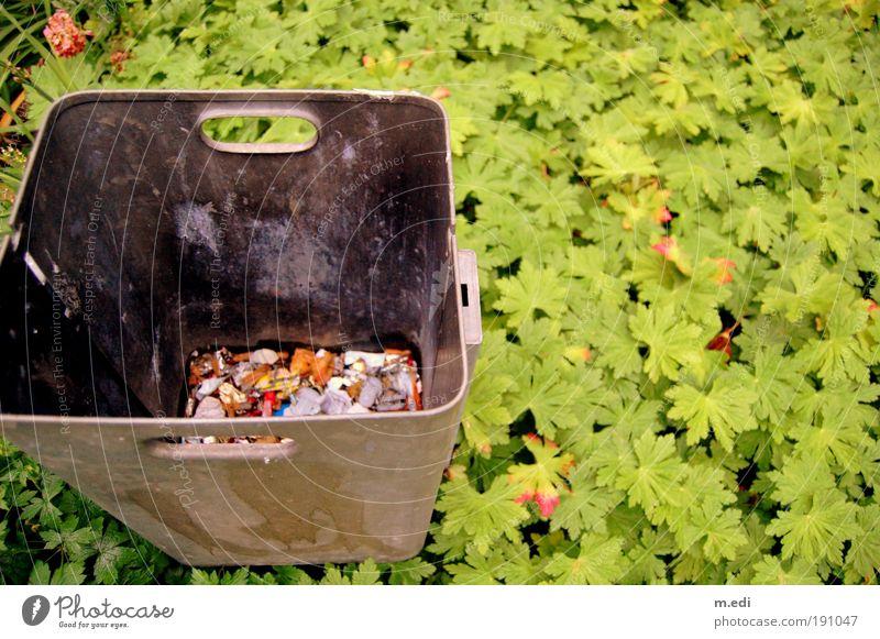alles für'n Müll.. grün Garten Park Müll Vogelperspektive Müllbehälter Efeu