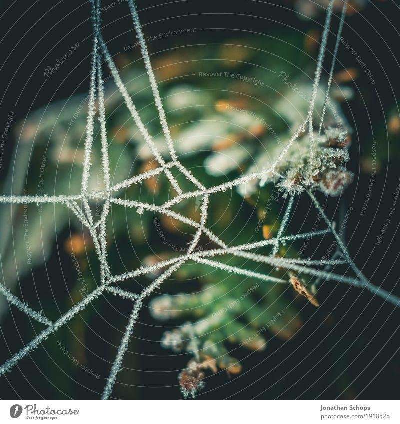 Eisige Spinnweben V Winter Natur Pflanze Herbst Nebel Traurigkeit kalt Trauer Einsamkeit Vergänglichkeit Frost Jahreszeiten Strukturen & Formen Netzwerk