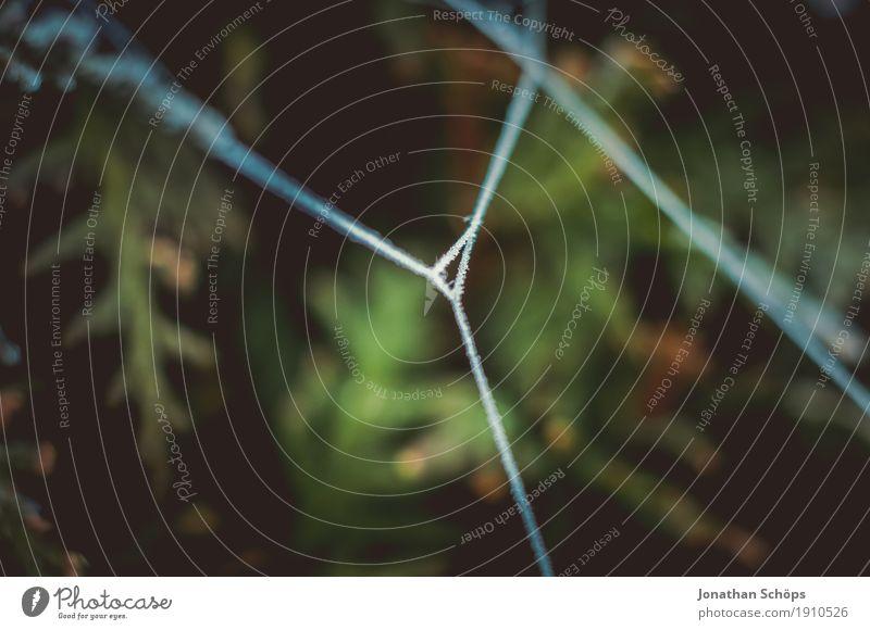 Eisige Spinnweben VI Natur Pflanze grün Einsamkeit Winter kalt Traurigkeit Herbst Tod Nebel Angst Vergänglichkeit 3 Schnur Trauer