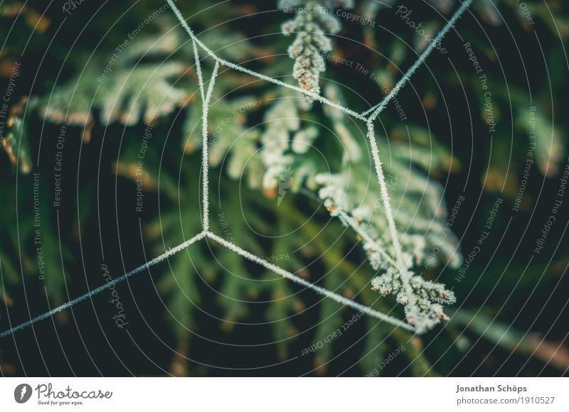 Eisige Spinnweben VII Natur Pflanze grün Einsamkeit Winter kalt Traurigkeit Herbst Tod Nebel Angst Sträucher Vergänglichkeit Trauer Frost Netzwerk